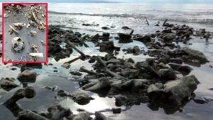 Van Gölü'nde sular çekilince kafatası ve kemikler ortaya çıktı