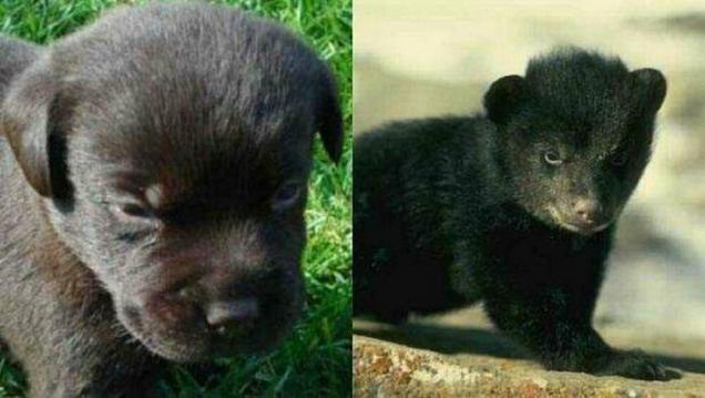 Çin'in Yunnan bölgesinde yaşayan Wang Kayui isimli adam, iki yıl önce bir Vietnamlı'dan iki köpek yavrusu aldı.