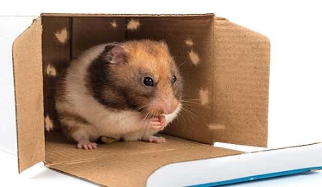 """Profesör elinde bir Fare ve kutu ile salona girdi. Öğrencilerin şaşkın bakışları arasında fareyi kutunun içine koydu ve kutuyu kapattı. Salona dönerek: """"Bu kutuya 2 gün kimse dokunmasın!"""" dedi ve salondan çıkıp gitti. Salondaki öğrenciler duruma bir anlam verememişlerdi. Ne olacağını merak ederek iki gün beklediler. Tam 2 gün sonunda profesör salona girdi ve kutuya yaklaşarak açtı. Kutunun içindeki fare hayatını kaybetmişti.. Sınıfa dönerek farenin neden dolayı hayatını kaybetmiş olabileceğini sordu."""