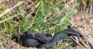 hazreti isa ve siyah yılan