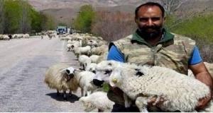 Çoban ve Zengin